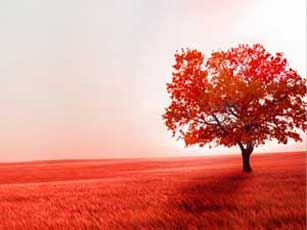 Colours and Nature