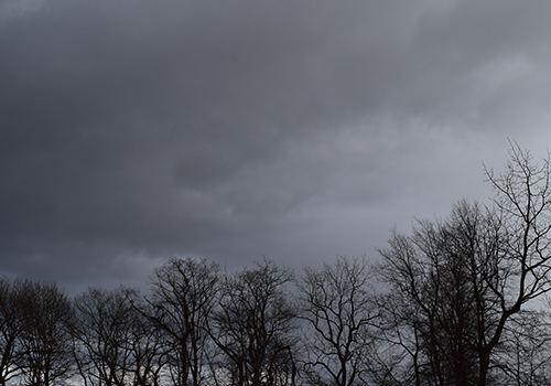 Dark cloudy sky & trees