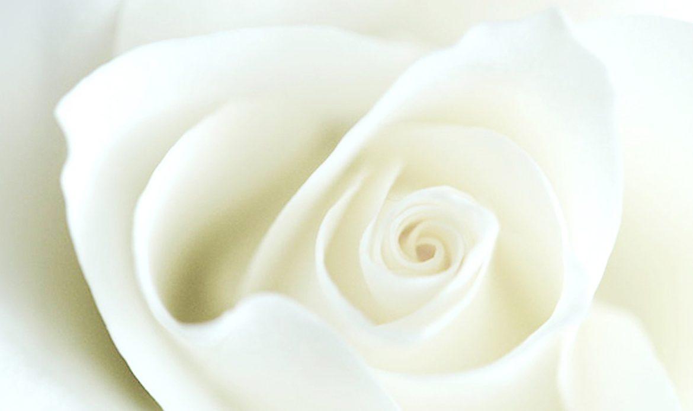 White-Rose-Banner-IMG